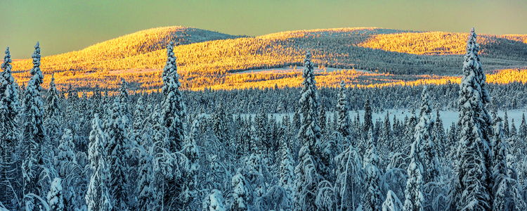 Winter landscape with snowy spruce trees and sun shining with warm light on mountains in the background, Gällivare, Swedish Lapland, Sweden
